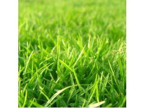 Описание трав.
